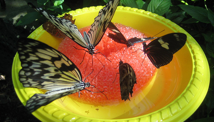 The Woodland Trust: Butterfly Feeders