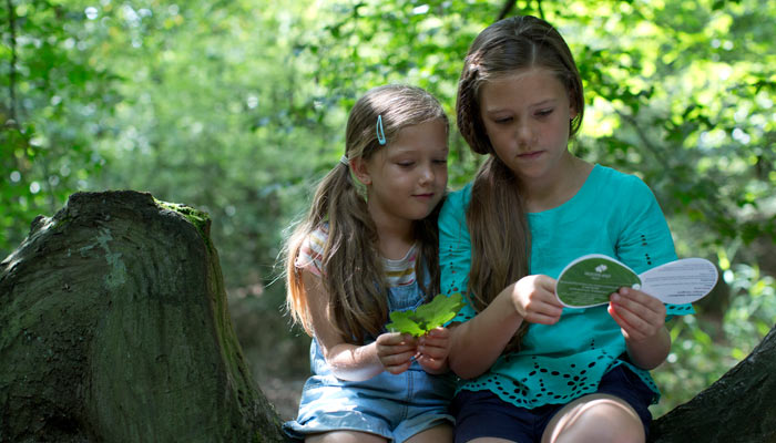 The Woodland Trust: Leaf Mobiles